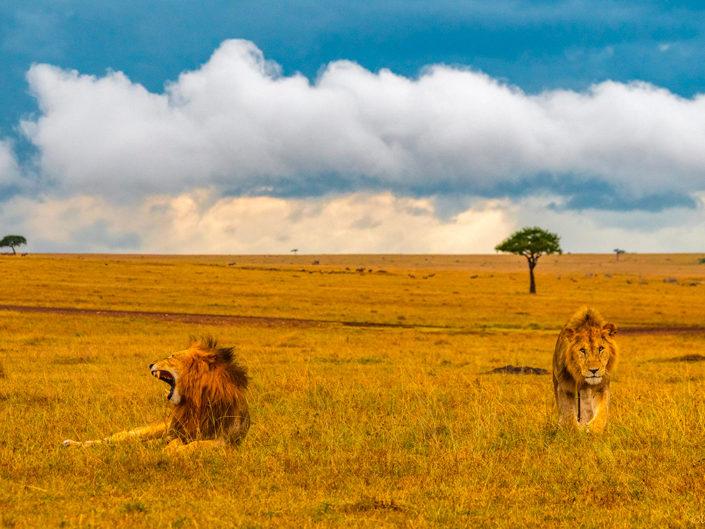 Oltepesi; Masai Mara Febr 2019